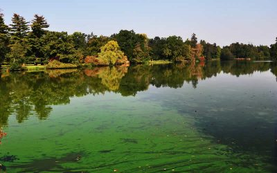 Be aware of blue-green algae