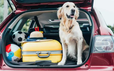 Pet Travel Update 2021 for EU and Ireland